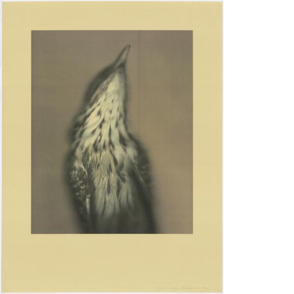 Ann Hamilton, Long-tailed Koel, 2021