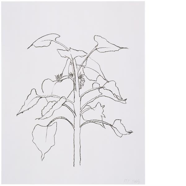 Ellsworth Kelly, Sunflower I, 2004