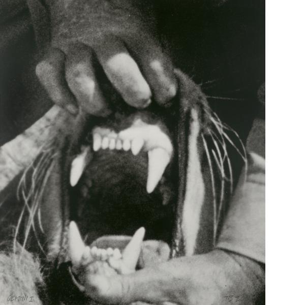 John Baldessari, Hands & Feet: Hands, Tiger & Teeth, 2017