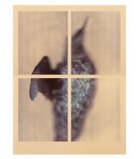 Ann Hamilton, Pigeon Guillemot, 2017
