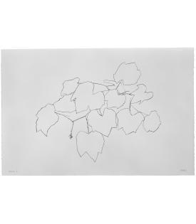 Ellsworth Kelly, Grape Leaves I, 1974