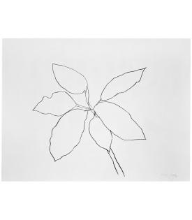Ellsworth Kelly St. Martin Tropical Plant, 1981