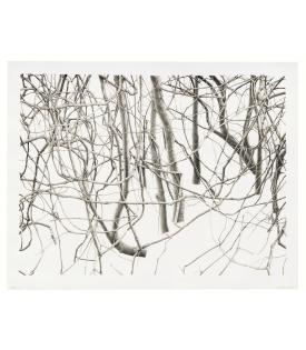 Toba Khedoori, Untitled (branches), 2020