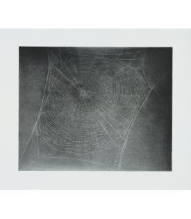 Vija Celmins, Untitled (Web 4), 2002